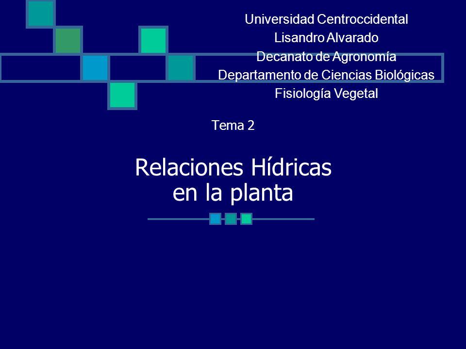 Tema 2 Relaciones Hídricas en la planta Universidad Centroccidental Lisandro Alvarado Decanato de Agronomía Departamento de Ciencias Biológicas Fisiol