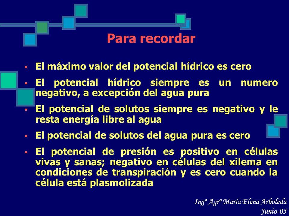 Para recordar El máximo valor del potencial hídrico es cero El potencial hídrico siempre es un numero negativo, a excepción del agua pura El potencial