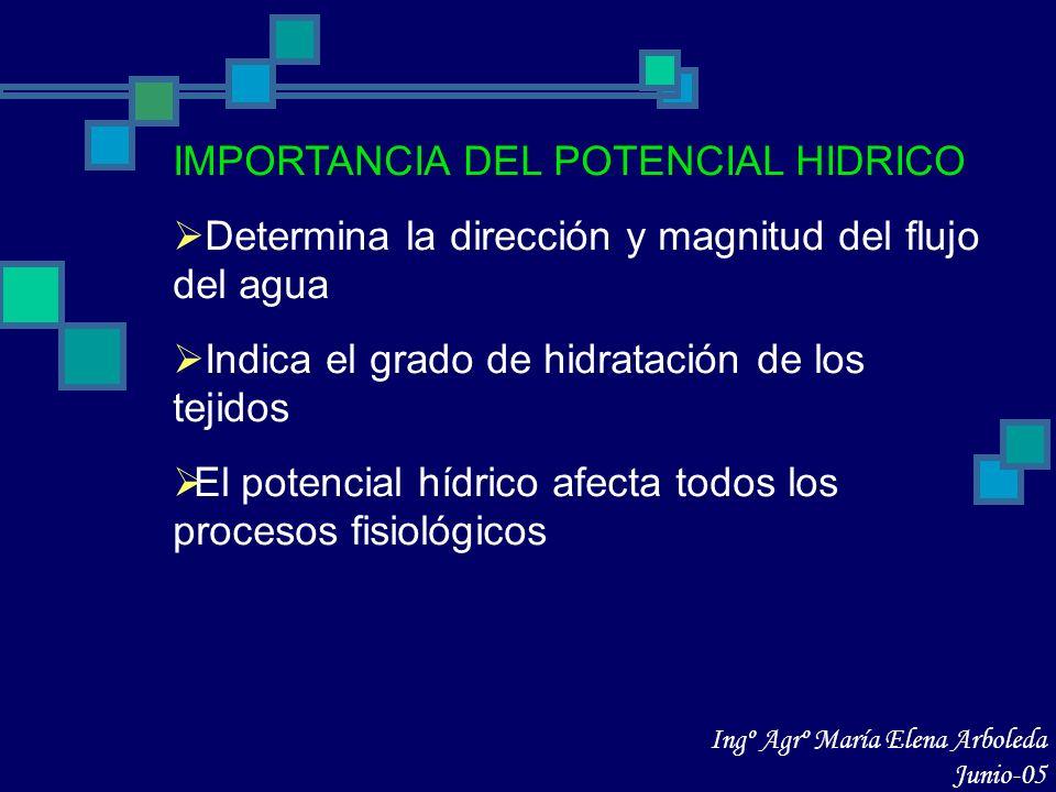 IMPORTANCIA DEL POTENCIAL HIDRICO Determina la dirección y magnitud del flujo del agua Indica el grado de hidratación de los tejidos El potencial hídr