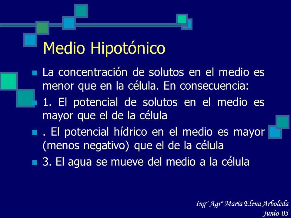 Medio Hipotónico La concentración de solutos en el medio es menor que en la célula. En consecuencia: 1. El potencial de solutos en el medio es mayor q