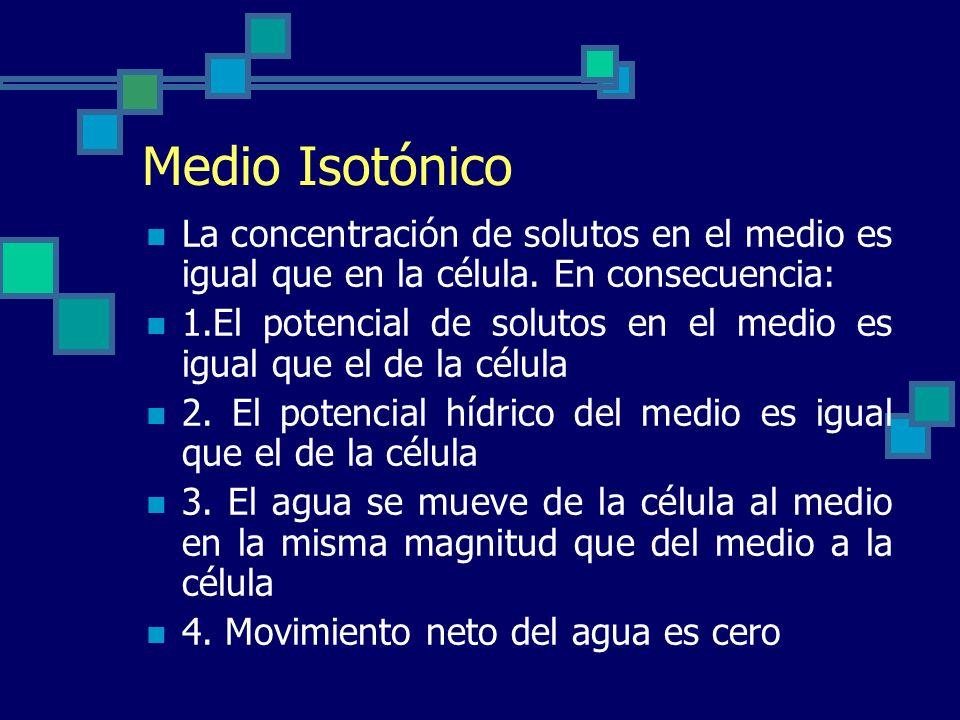 Medio Isotónico La concentración de solutos en el medio es igual que en la célula. En consecuencia: 1.El potencial de solutos en el medio es igual que