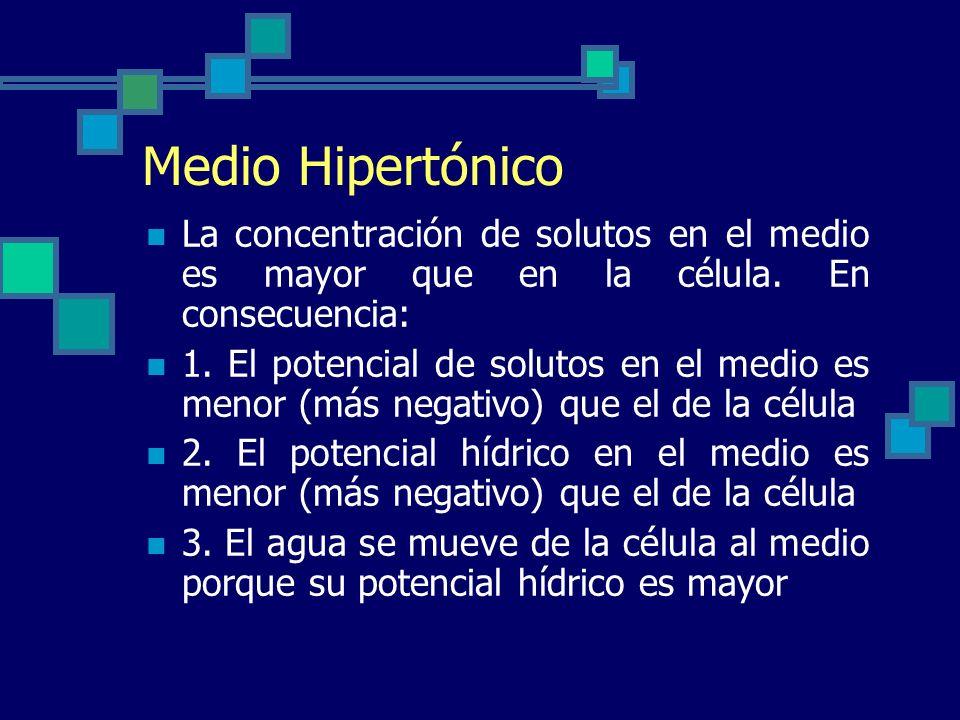 Medio Hipertónico La concentración de solutos en el medio es mayor que en la célula. En consecuencia: 1. El potencial de solutos en el medio es menor