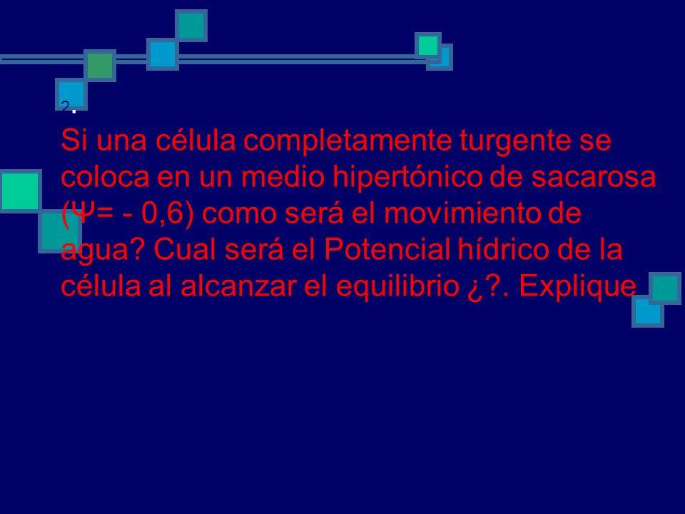 2. Si una célula completamente turgente se coloca en un medio hipertónico de sacarosa (Ψ= - 0,6) como será el movimiento de agua? Cual será el Potenci