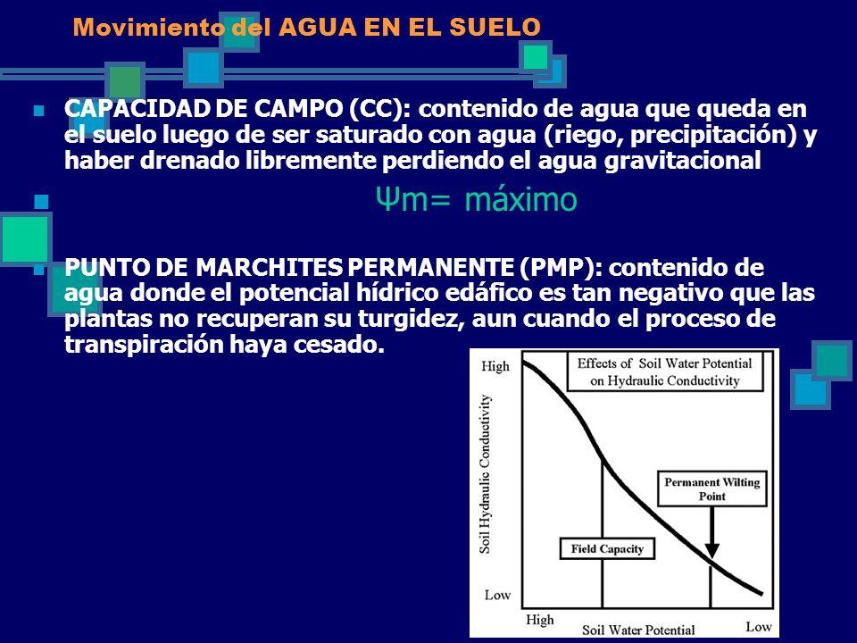 Movimiento del AGUA EN EL SUELO CAPACIDAD DE CAMPO (CC): contenido de agua que queda en el suelo luego de ser saturado con agua (riego, precipitación)