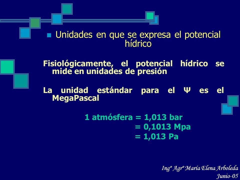 Componentes del potencial hídrico Potencial de solutos u osmótico Ψs Potencial de presión Ψp Potencial mátrico Ψm Potencial de gravedad Ψg Ψ = Ψs+Ψp+Ψm+Ψg Ingº Agrº María Elena Arboleda Junio-05