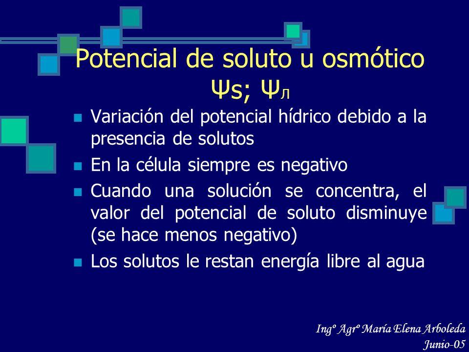 Potencial de soluto u osmótico Ψs; Ψ Л Variación del potencial hídrico debido a la presencia de solutos En la célula siempre es negativo Cuando una so
