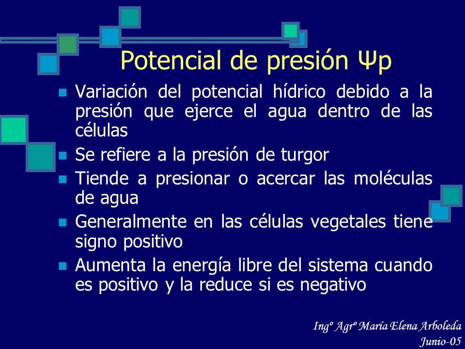 Potencial de presión Ψp Variación del potencial hídrico debido a la presión que ejerce el agua dentro de las células Se refiere a la presión de turgor