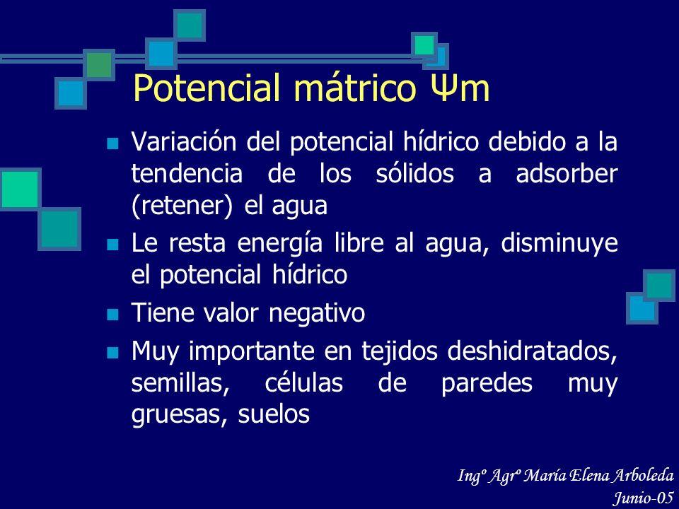 Potencial mátrico Ψm Variación del potencial hídrico debido a la tendencia de los sólidos a adsorber (retener) el agua Le resta energía libre al agua,