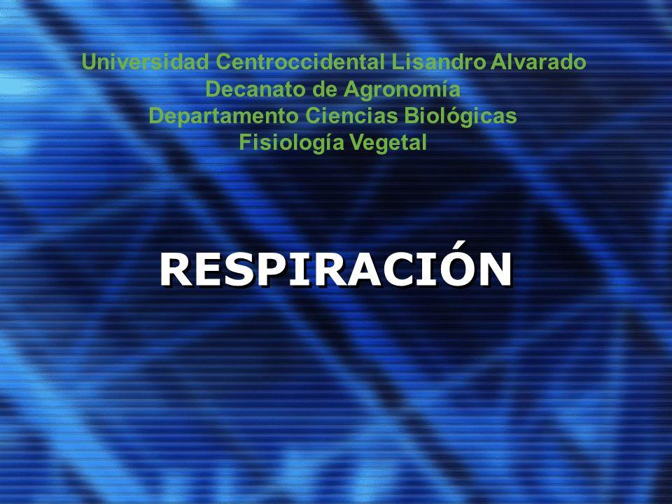 RESPIRACIÓN Universidad Centroccidental Lisandro Alvarado Decanato de Agronomía Departamento Ciencias Biológicas Fisiología Vegetal