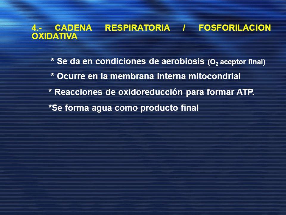 4.- CADENA RESPIRATORIA / FOSFORILACION OXIDATIVA * Se da en condiciones de aerobiosis (O 2 aceptor final) * Ocurre en la membrana interna mitocondria