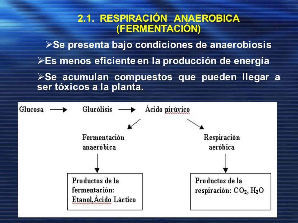 2.1. RESPIRACIÓN ANAEROBICA (FERMENTACIÓN) Se presenta bajo condiciones de anaerobiosis Es menos eficiente en la producción de energía Se acumulan com