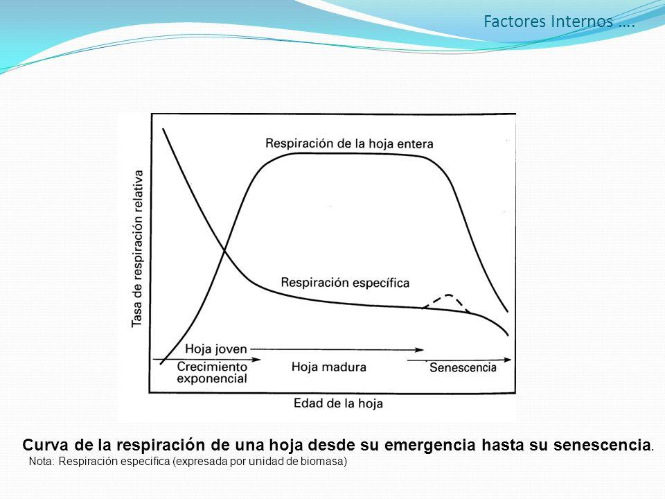 Factores Internos …. Curva de la respiración de una hoja desde su emergencia hasta su senescencia. Nota: Respiración especifica (expresada por unidad