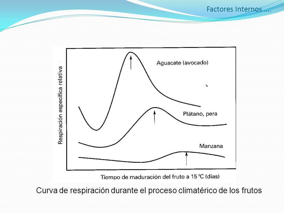 Curva de respiración durante el proceso climatérico de los frutos