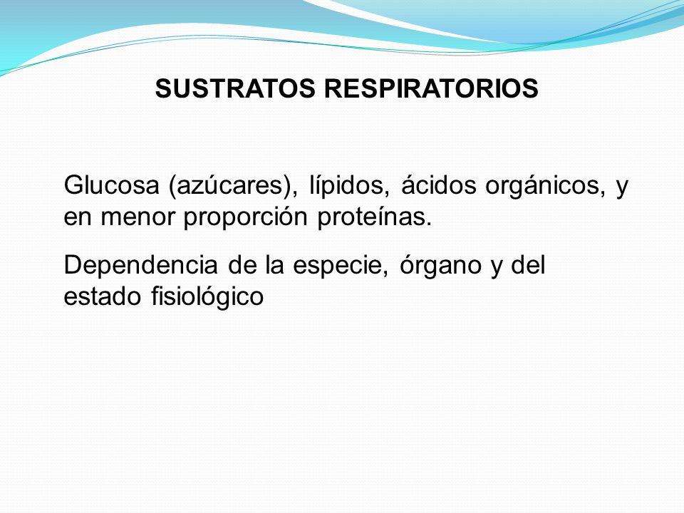 SUSTRATOS RESPIRATORIOS Glucosa (azúcares), lípidos, ácidos orgánicos, y en menor proporción proteínas. Dependencia de la especie, órgano y del estado