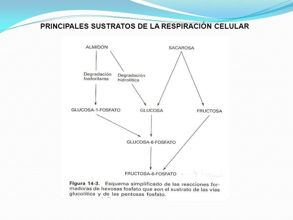 FASES DE LA RESPIRACION 1. 2. 3.