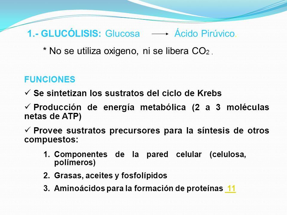 1.- GLUCÓLISIS: Glucosa Ácido Pirúvico. * No se utiliza oxigeno, ni se libera CO 2. FUNCIONES Se sintetizan los sustratos del ciclo de Krebs Producció