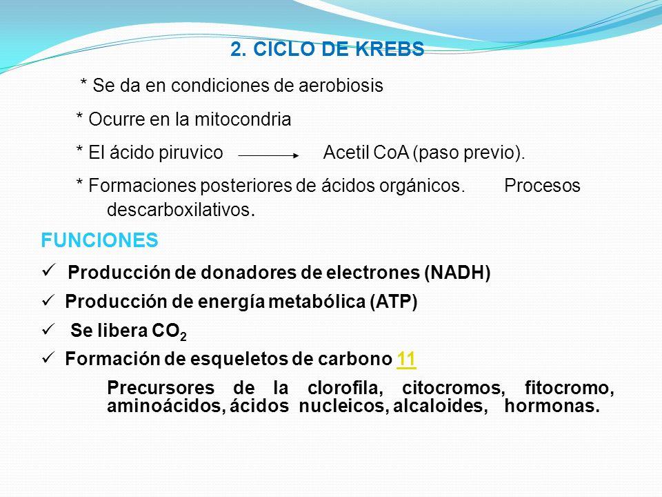 2. CICLO DE KREBS * Se da en condiciones de aerobiosis * Ocurre en la mitocondria * El ácido piruvico Acetil CoA (paso previo). * Formaciones posterio