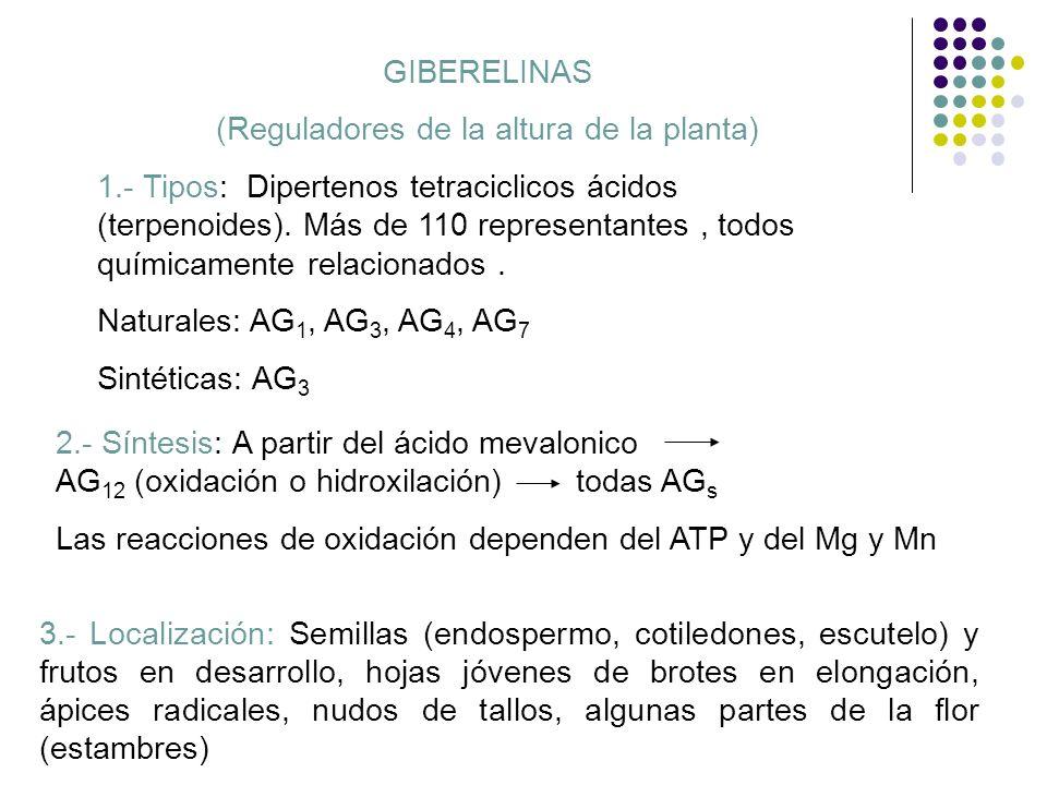 GIBERELINAS (Reguladores de la altura de la planta) 1.- Tipos: Dipertenos tetraciclicos ácidos (terpenoides). Más de 110 representantes, todos química