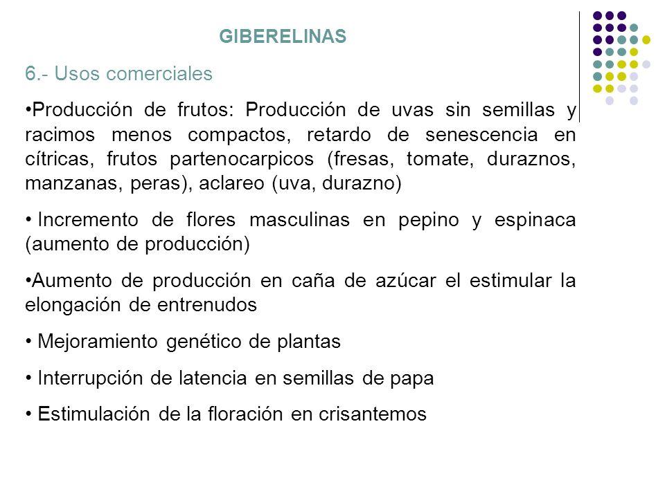 GIBERELINAS 6.- Usos comerciales Producción de frutos: Producción de uvas sin semillas y racimos menos compactos, retardo de senescencia en cítricas,