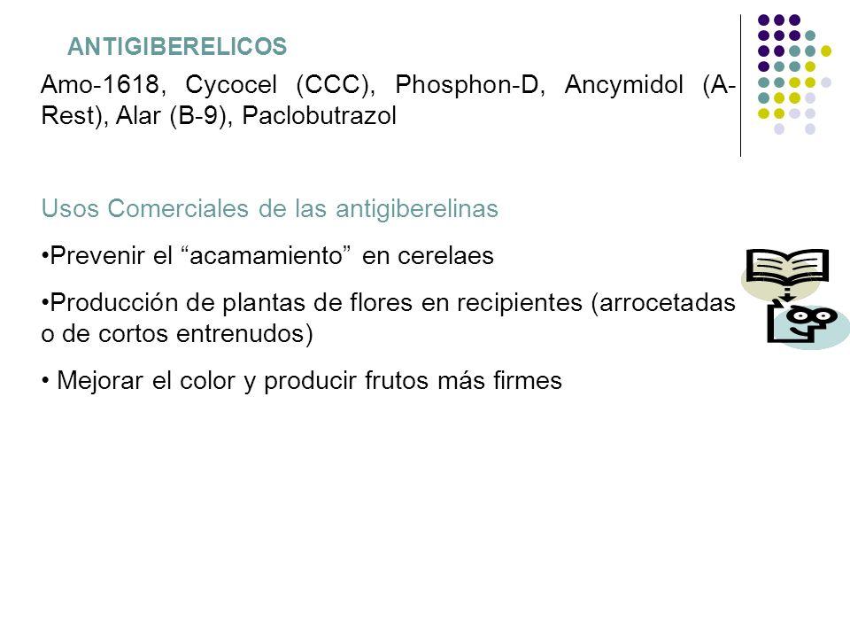 ANTIGIBERELICOS Amo-1618, Cycocel (CCC), Phosphon-D, Ancymidol (A- Rest), Alar (B-9), Paclobutrazol Usos Comerciales de las antigiberelinas Prevenir e