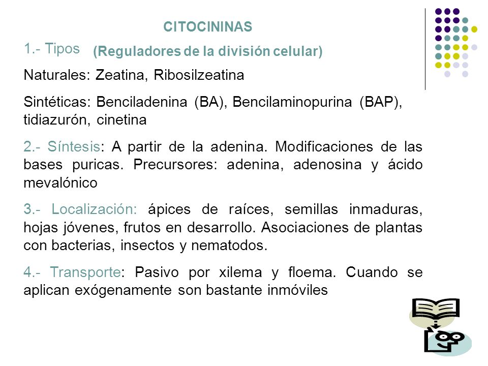 CITOCININAS (Reguladores de la división celular) 1.- Tipos Naturales: Zeatina, Ribosilzeatina Sintéticas: Benciladenina (BA), Bencilaminopurina (BAP),