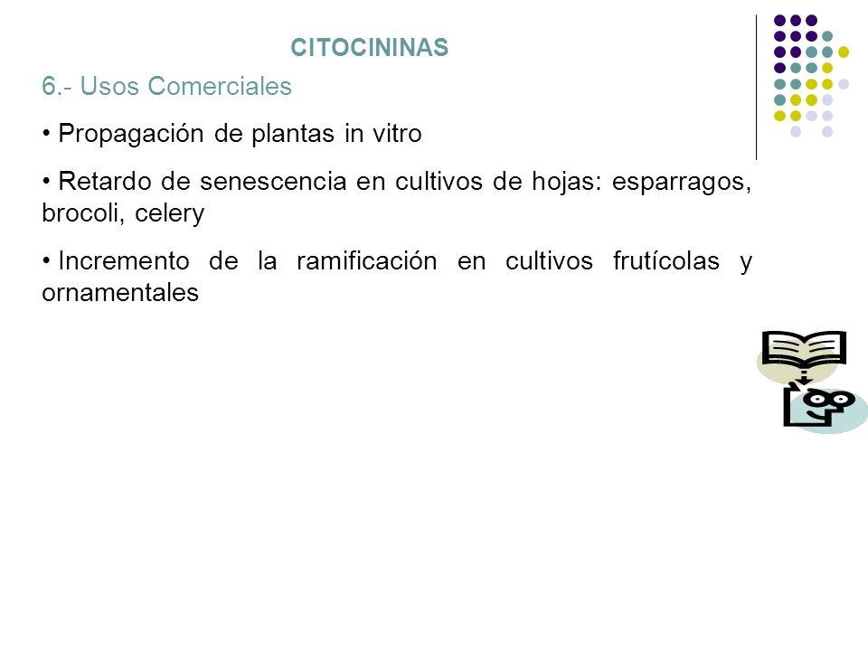 CITOCININAS 6.- Usos Comerciales Propagación de plantas in vitro Retardo de senescencia en cultivos de hojas: esparragos, brocoli, celery Incremento d