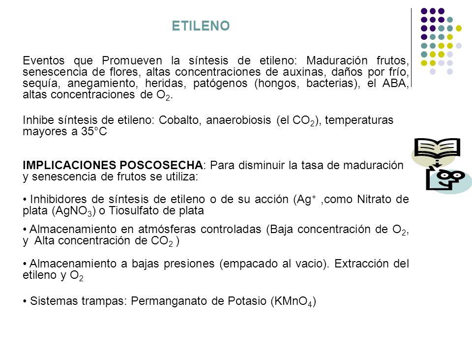 ETILENO Eventos que Promueven la síntesis de etileno: Maduración frutos, senescencia de flores, altas concentraciones de auxinas, daños por frío, sequ