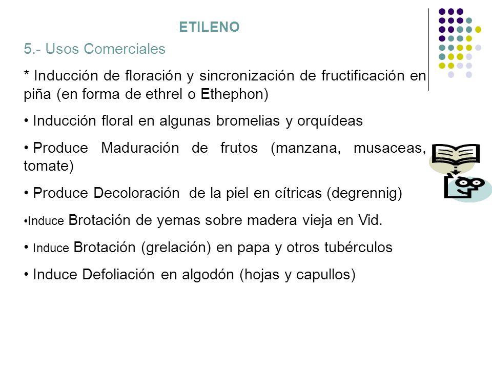 ETILENO 5.- Usos Comerciales * Inducción de floración y sincronización de fructificación en piña (en forma de ethrel o Ethephon) Inducción floral en a