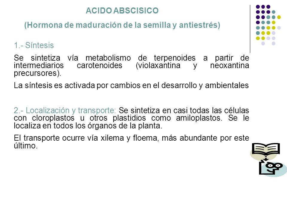 ACIDO ABSCISICO (Hormona de maduración de la semilla y antiestrés) 1.- Síntesis Se sintetiza vía metabolismo de terpenoides a partir de intermediarios