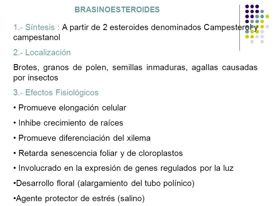 BRASINOESTEROIDES 1.- Síntesis : A partir de 2 esteroides denominados Campesterol y campestanol 2.- Localización Brotes, granos de polen, semillas inm