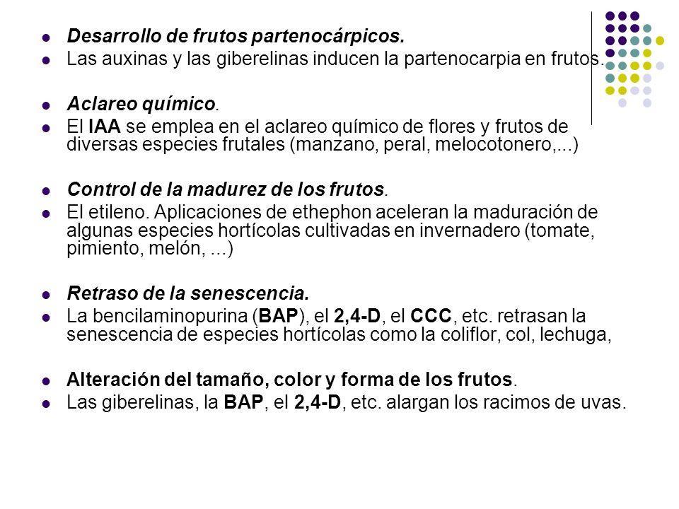Desarrollo de frutos partenocárpicos. Las auxinas y las giberelinas inducen la partenocarpia en frutos. Aclareo químico. El IAA se emplea en el aclare
