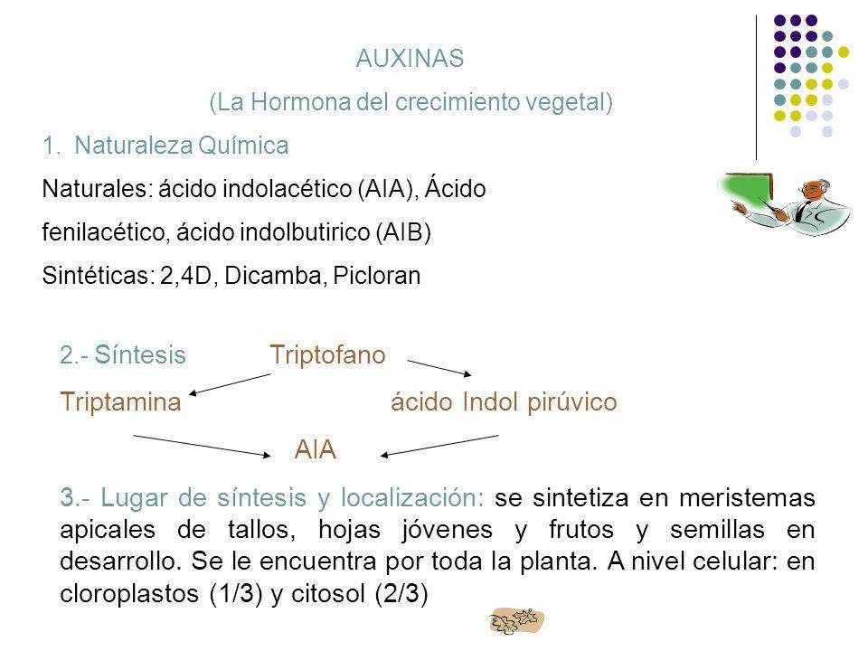 AUXINAS (La Hormona del crecimiento vegetal) 1.Naturaleza Química Naturales: ácido indolacético (AIA), Ácido fenilacético, ácido indolbutirico (AIB) S