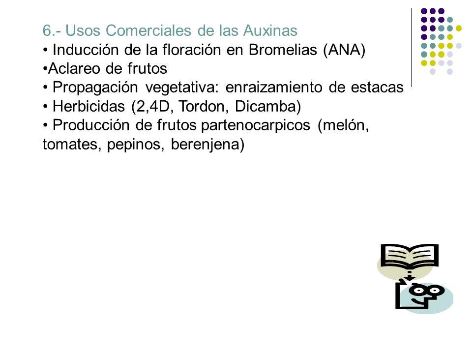 6.- Usos Comerciales de las Auxinas Inducción de la floración en Bromelias (ANA) Aclareo de frutos Propagación vegetativa: enraizamiento de estacas He