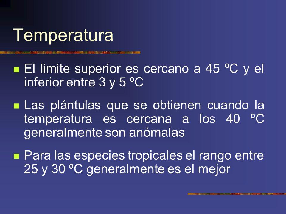 Temperatura El limite superior es cercano a 45 ºC y el inferior entre 3 y 5 ºC Las plántulas que se obtienen cuando la temperatura es cercana a los 40