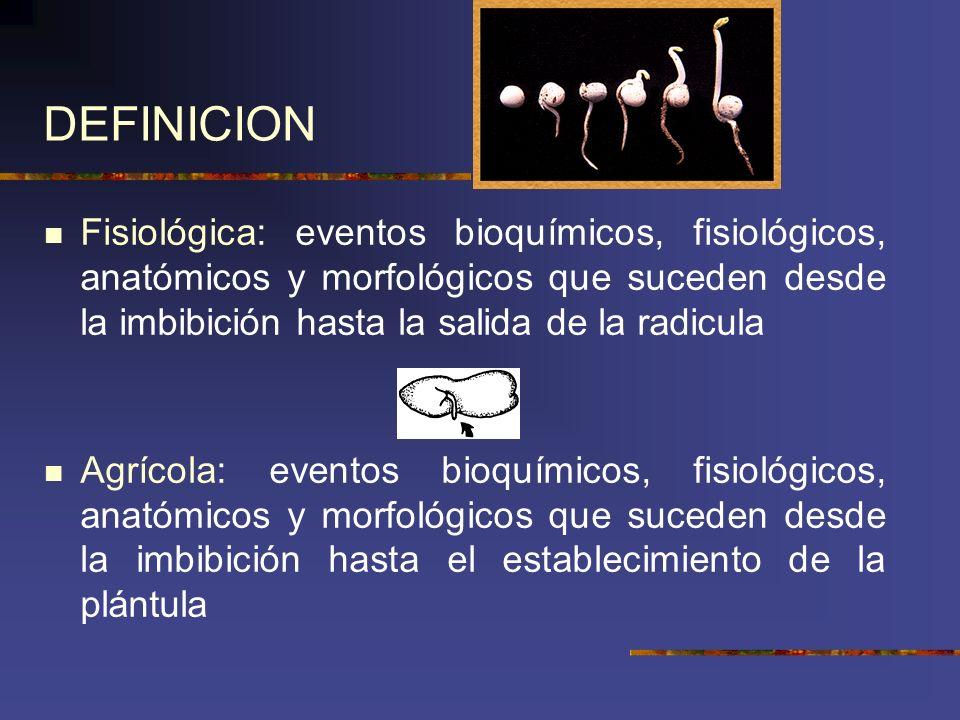 DEFINICION Fisiológica: eventos bioquímicos, fisiológicos, anatómicos y morfológicos que suceden desde la imbibición hasta la salida de la radicula Ag