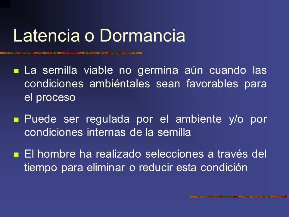 Latencia o Dormancia La semilla viable no germina aún cuando las condiciones ambiéntales sean favorables para el proceso Puede ser regulada por el amb