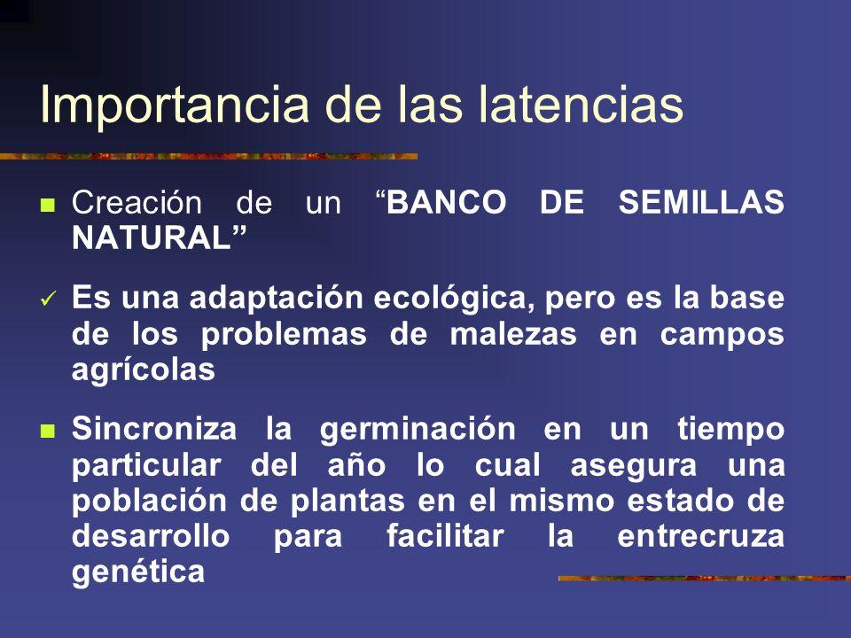 Importancia de las latencias Creación de un BANCO DE SEMILLAS NATURAL Es una adaptación ecológica, pero es la base de los problemas de malezas en camp