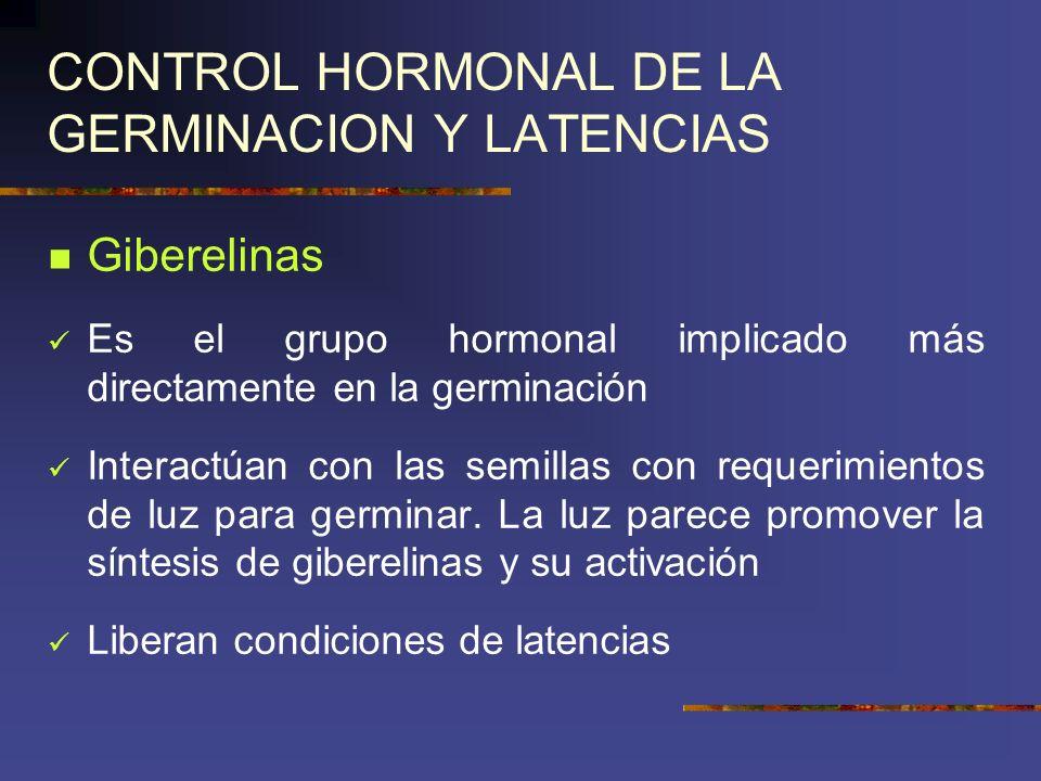 CONTROL HORMONAL DE LA GERMINACION Y LATENCIAS Giberelinas Es el grupo hormonal implicado más directamente en la germinación Interactúan con las semil