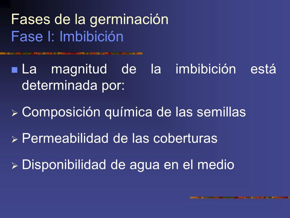 Fases de la germinación Fase I: Imbibición La magnitud de la imbibición está determinada por: Composición química de las semillas Permeabilidad de las