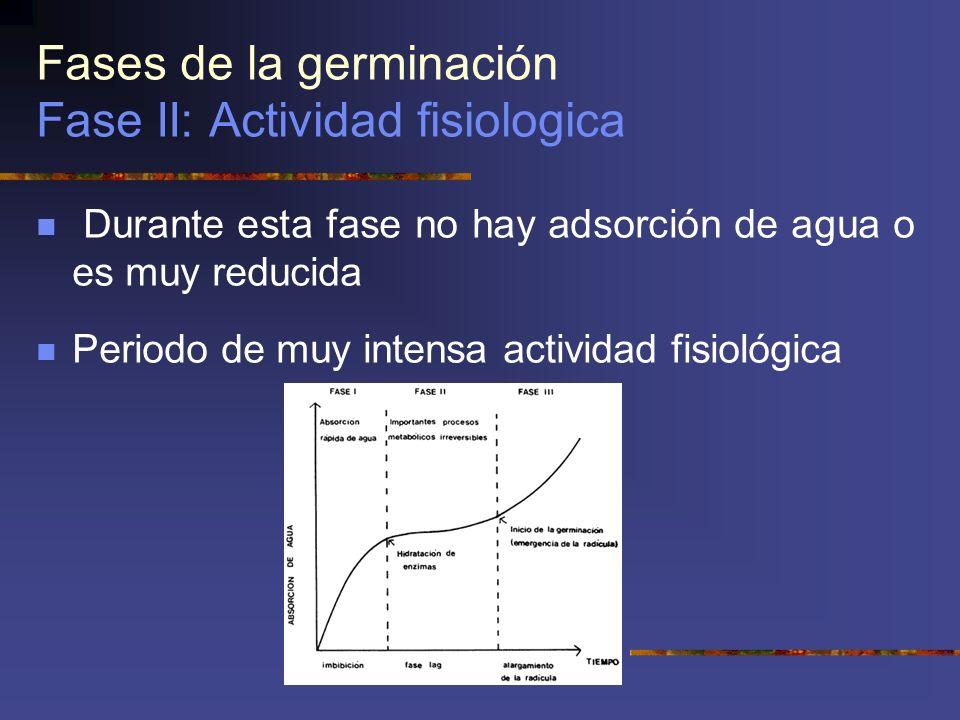 Fases de la germinación Fase II: Actividad fisiologica Durante esta fase no hay adsorción de agua o es muy reducida Periodo de muy intensa actividad f