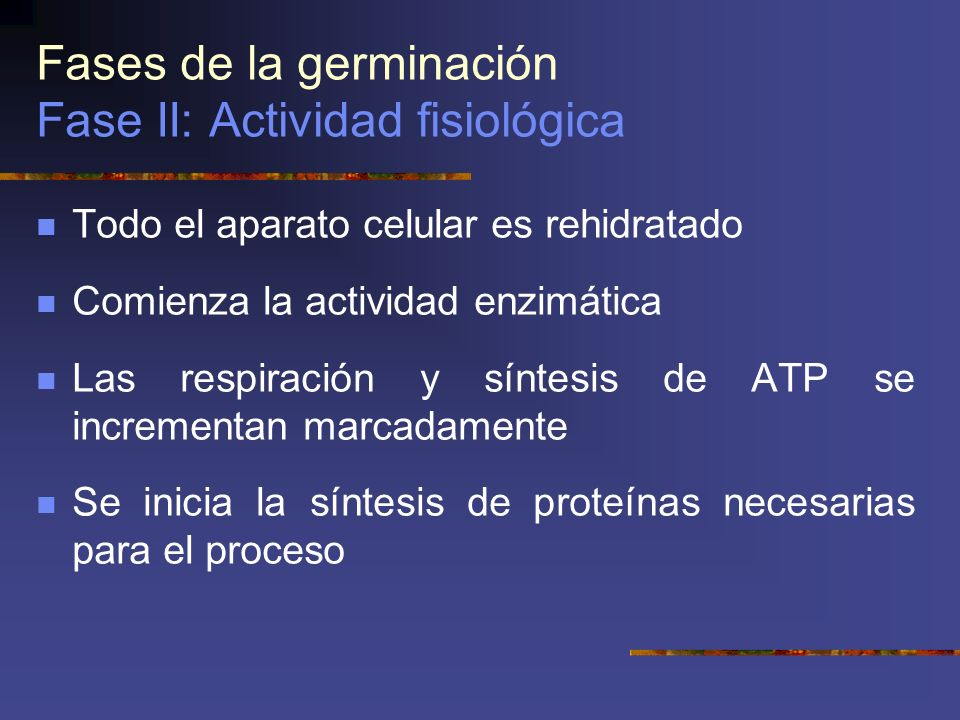 Fases de la germinación Fase II: Actividad fisiológica Todo el aparato celular es rehidratado Comienza la actividad enzimática Las respiración y sínte