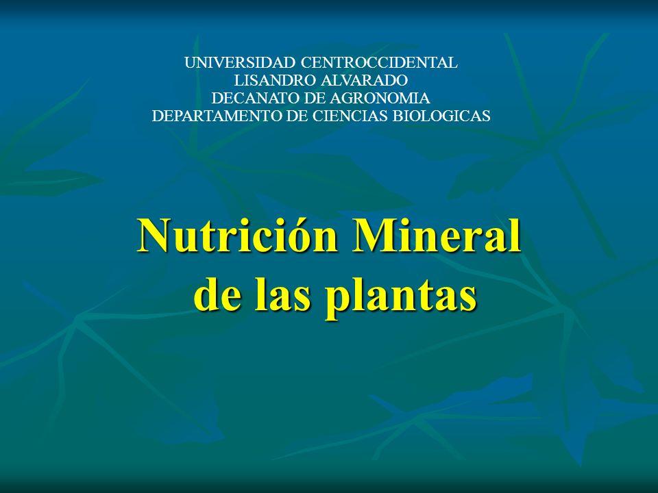 Nutrición Mineral de las plantas UNIVERSIDAD CENTROCCIDENTAL LISANDRO ALVARADO DECANATO DE AGRONOMIA DEPARTAMENTO DE CIENCIAS BIOLOGICAS