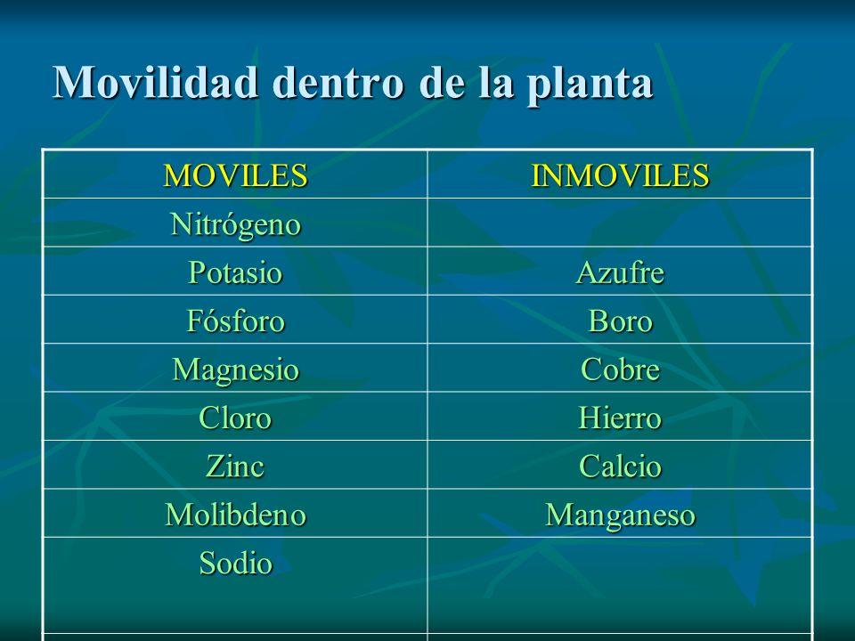 Movilidad dentro de la planta MOVILESINMOVILES Nitrógeno PotasioAzufre FósforoBoro MagnesioCobre CloroHierro ZincCalcio MolibdenoManganeso Sodio