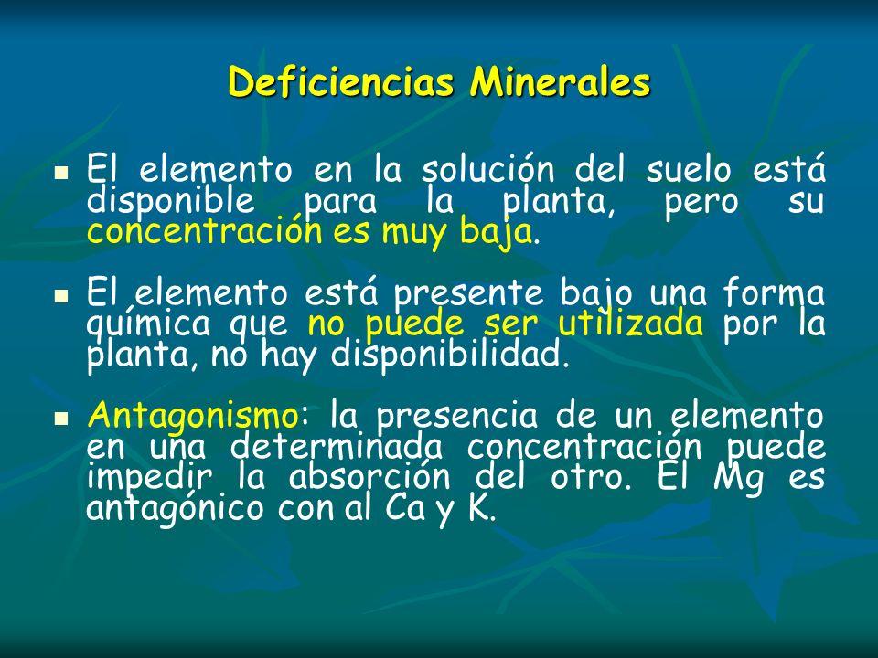 Deficiencias Minerales El elemento en la solución del suelo está disponible para la planta, pero su concentración es muy baja. El elemento está presen
