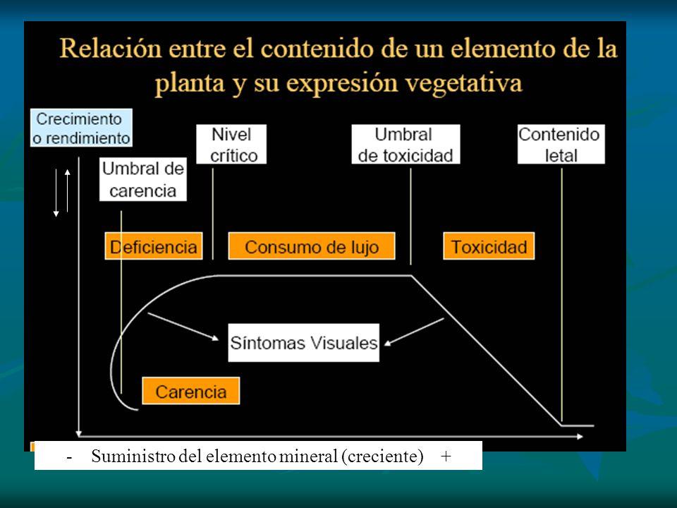 - Suministro del elemento mineral (creciente) +