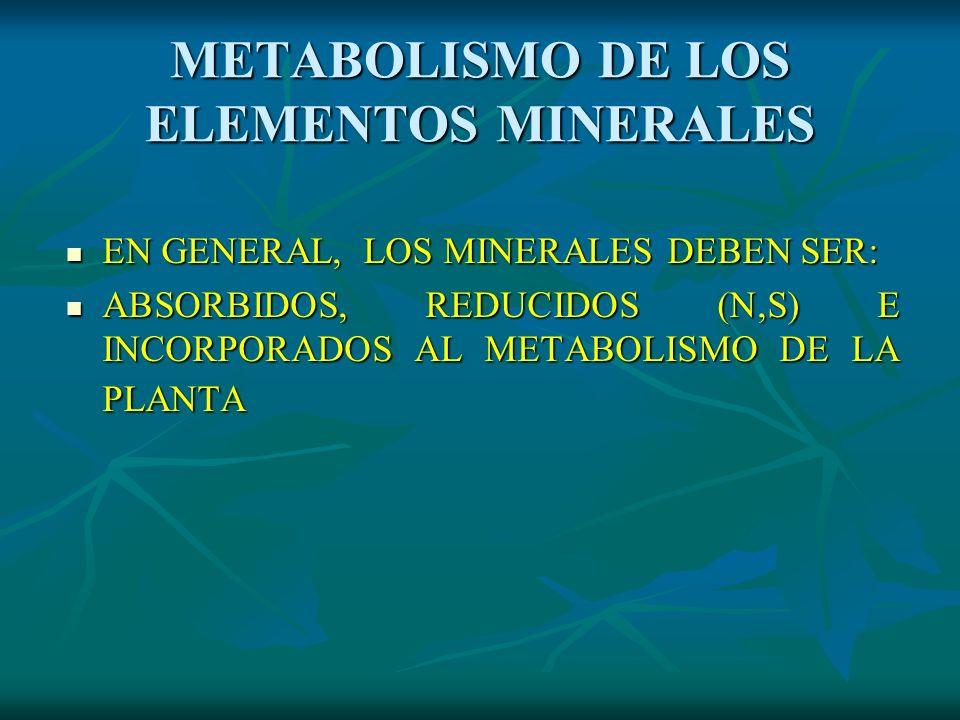 METABOLISMO DE LOS ELEMENTOS MINERALES EN GENERAL, LOS MINERALES DEBEN SER: EN GENERAL, LOS MINERALES DEBEN SER: ABSORBIDOS, REDUCIDOS (N,S) E INCORPO
