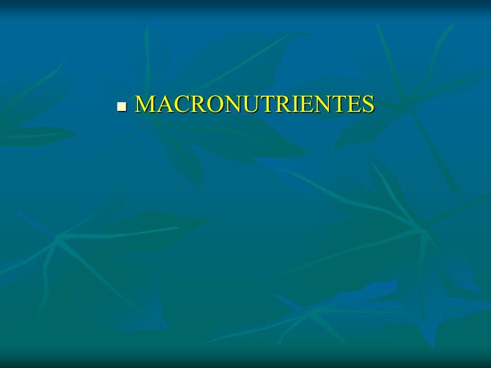 MACRONUTRIENTES MACRONUTRIENTES