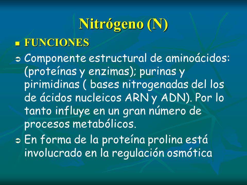 Nitrógeno (N) FUNCIONES FUNCIONES Componente estructural de aminoácidos: (proteínas y enzimas); purinas y pirimidinas ( bases nitrogenadas del los de