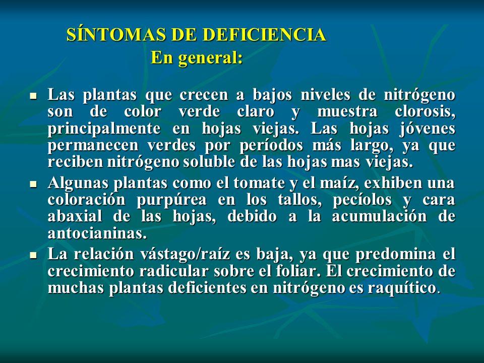SÍNTOMAS DE DEFICIENCIA En general: Las plantas que crecen a bajos niveles de nitrógeno son de color verde claro y muestra clorosis, principalmente en