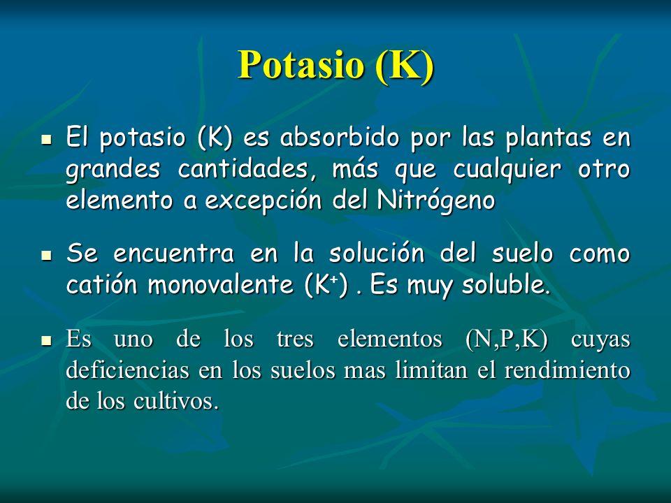 Potasio (K) El potasio (K) es absorbido por las plantas en grandes cantidades, más que cualquier otro elemento a excepción del Nitrógeno El potasio (K